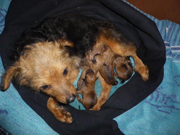 Aurelle ma tite chienne 110327114546896067-270d5e9