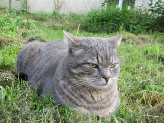 Spider chat tigré gris mâle FIV+ de 08/2005 - dpt 56 Img_0991-278e6e6