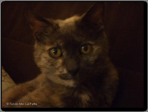 LUNA très gentille, entre 10 et 13 ans Luna---02-2246d93