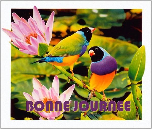 BONNE JOURNEE DE LUNDI 01da2b26-27e9380